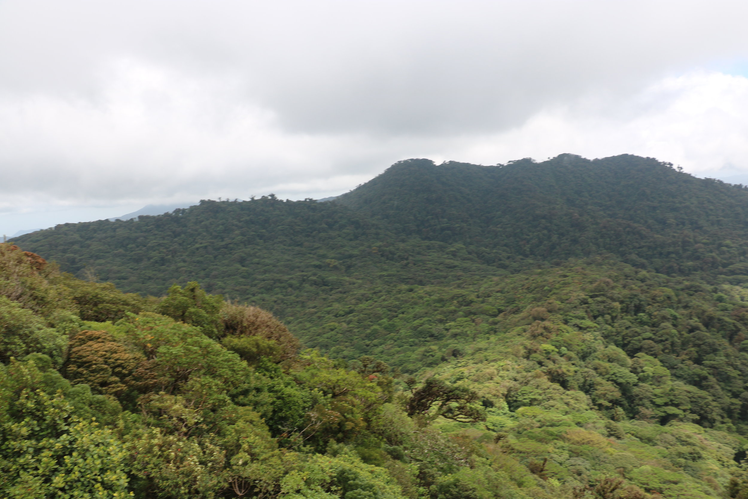 The continental divide in an area in Monteverde where Golden Toads were, surprisingly, never found to exist.