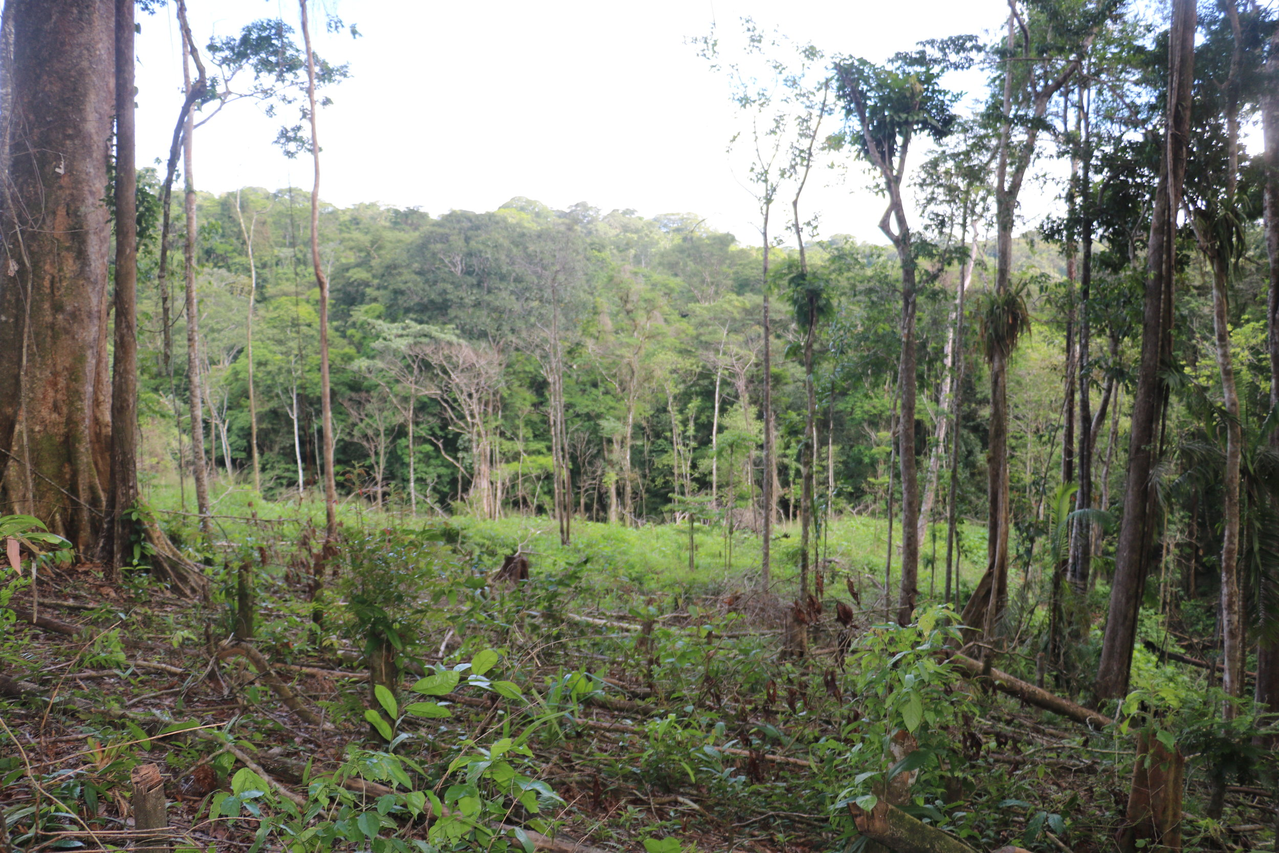 """""""Protected"""" forest"""