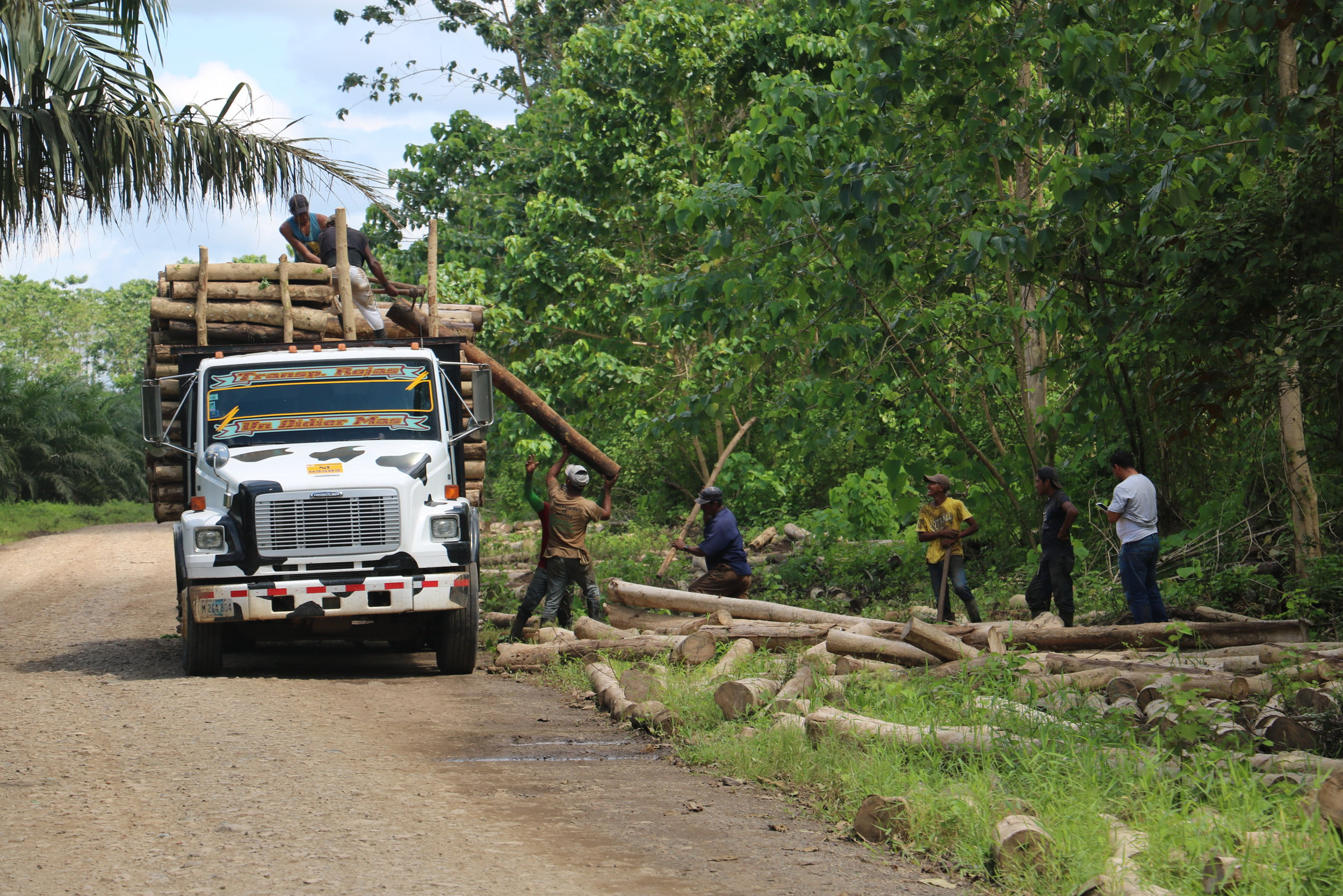 Laborers loading up Gmelina just outside the borders of the Reserve