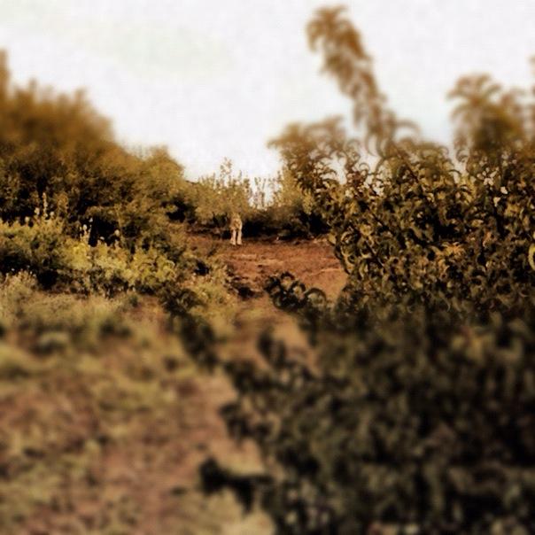 Coyote-Encounter-look-closely.jpg