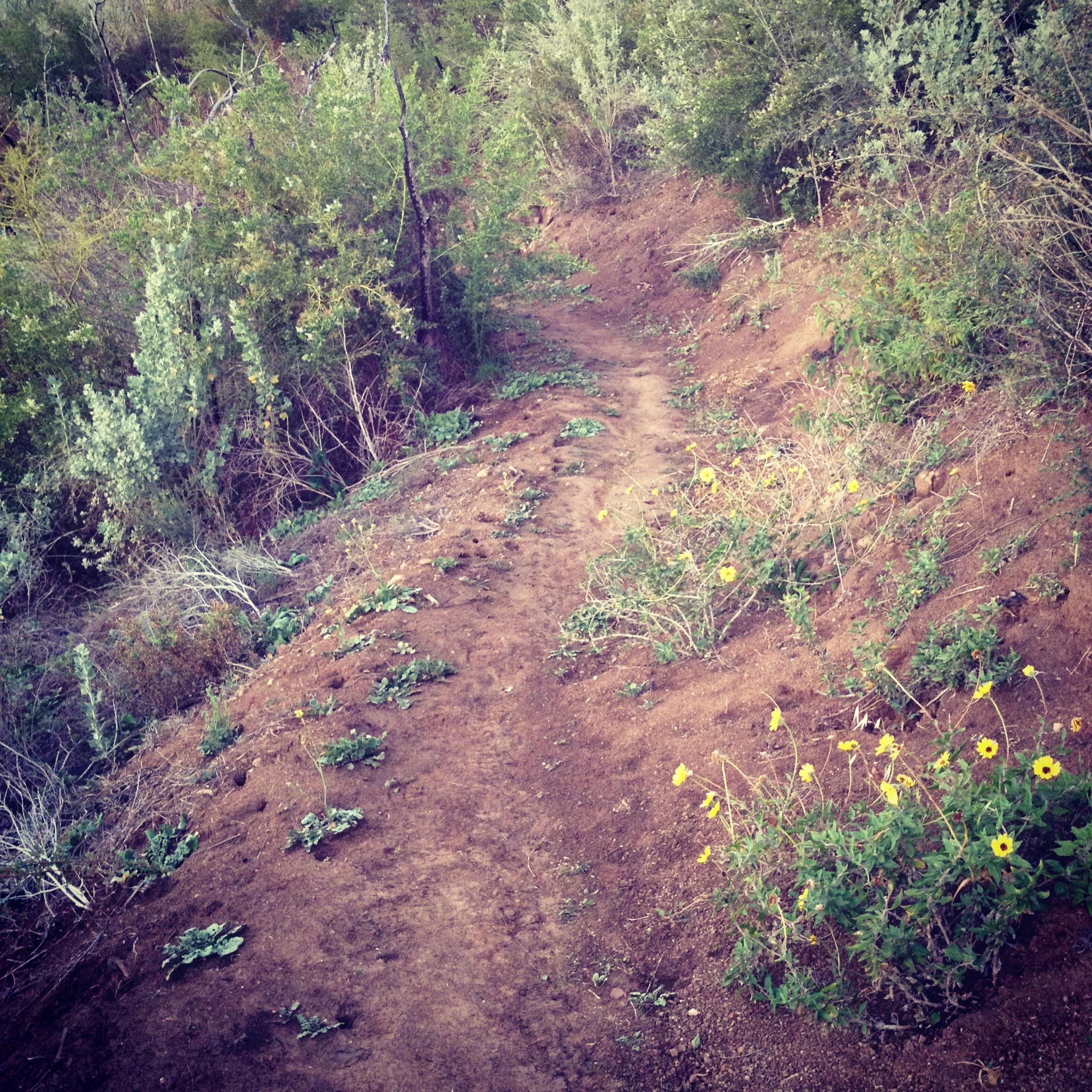 What-the-trail-looks-like.jpg