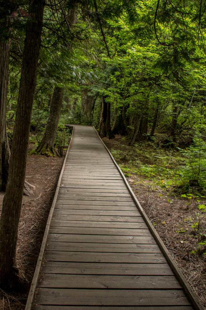 Trail of the Cedars