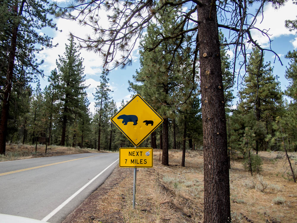 Bear Crossing - You Don't See This Every Day in California
