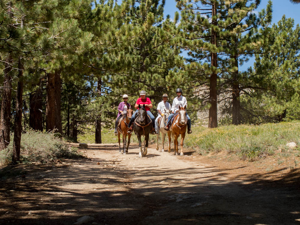 Horses on the Mount Pinos Trail