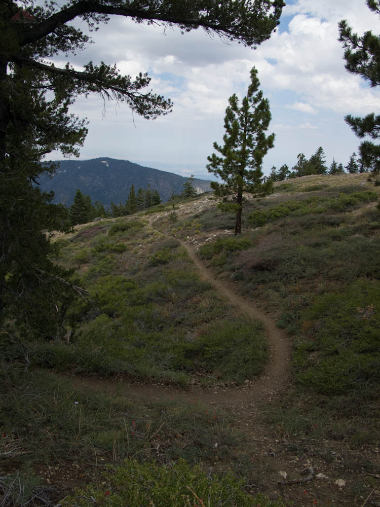 Trail on the way back up to Mount Pinos
