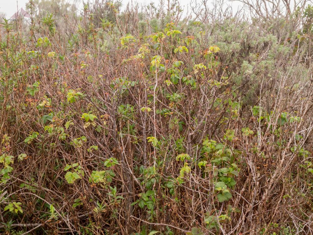 Poison Oak was everywhere