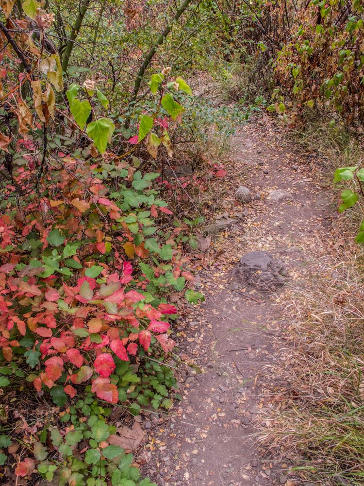 Poison Oak along the trail