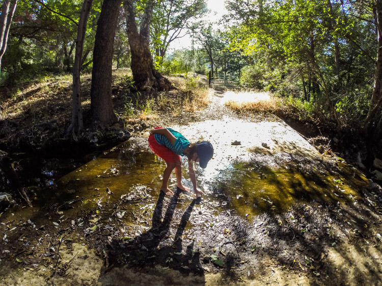 Exploring Davy Brown Creek