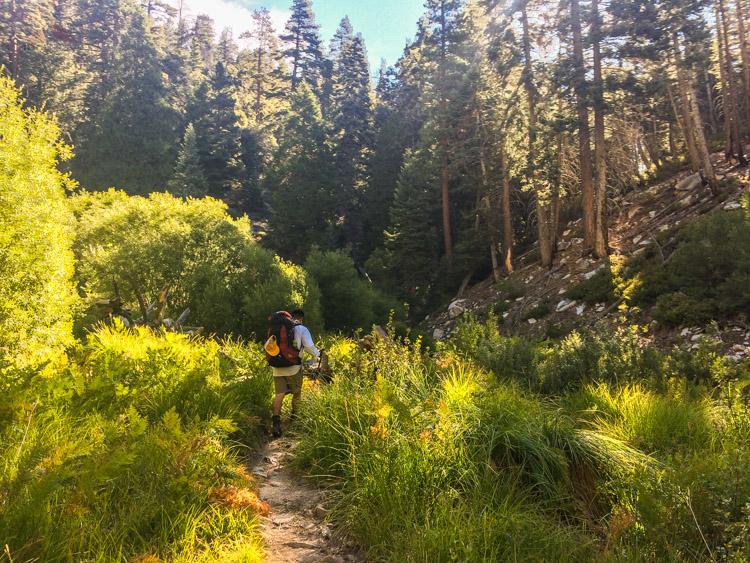 On the Vivian Creek Trail