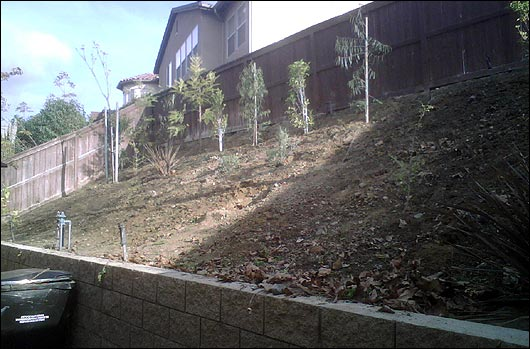 The bare slope