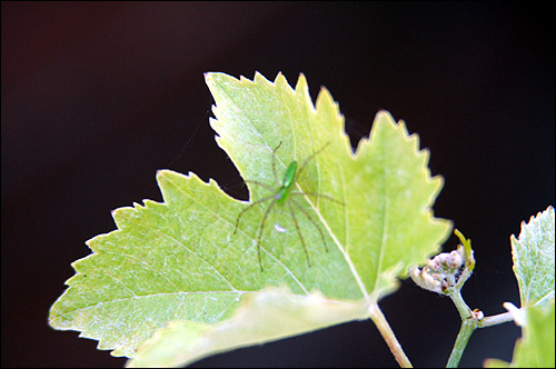 Friend on the vines