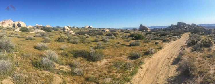 The desert was pretty green