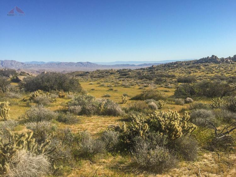 The Green desert meadow