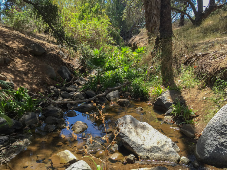 Felicita Creek, still flowing in September during a dry year