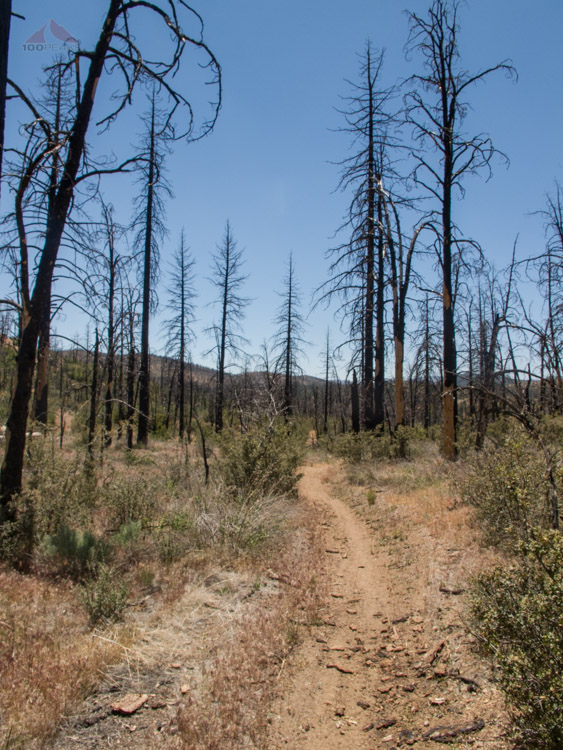 Burnt trees along the hot trail