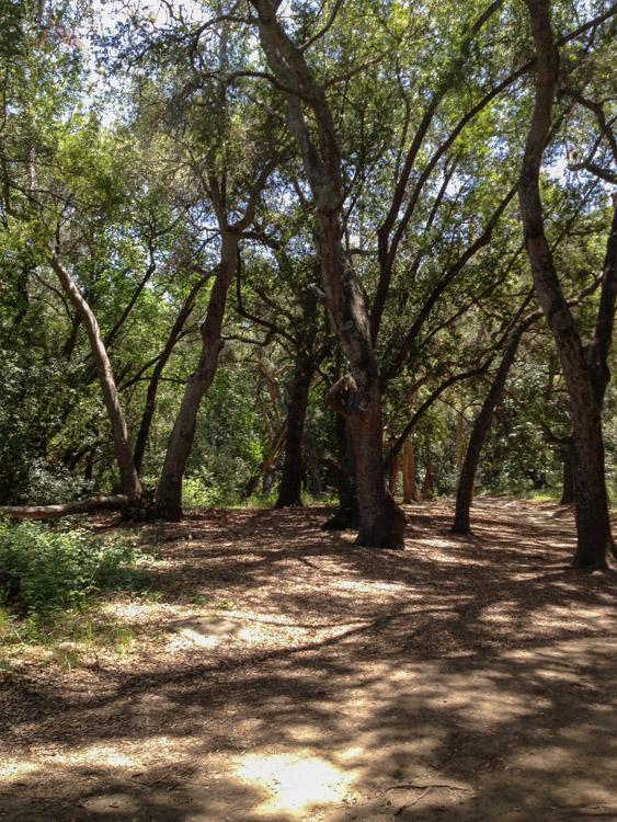 Shady Trail Under the Oaks