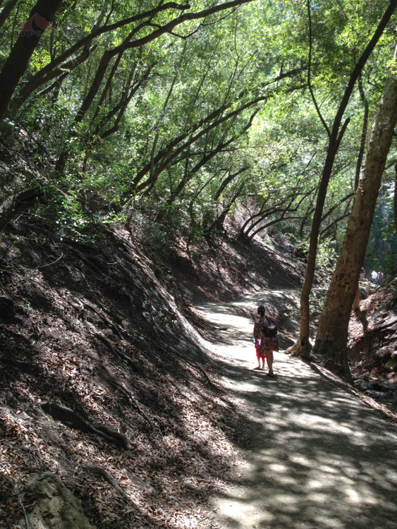 The trail to Nojoqui Falls is short, but beautiful