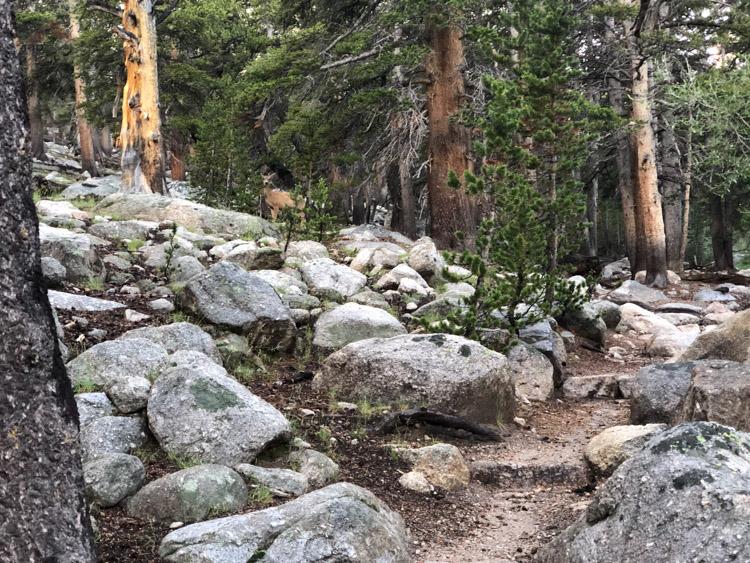 Deer on the Cottonwood Lakes Trail.jpg