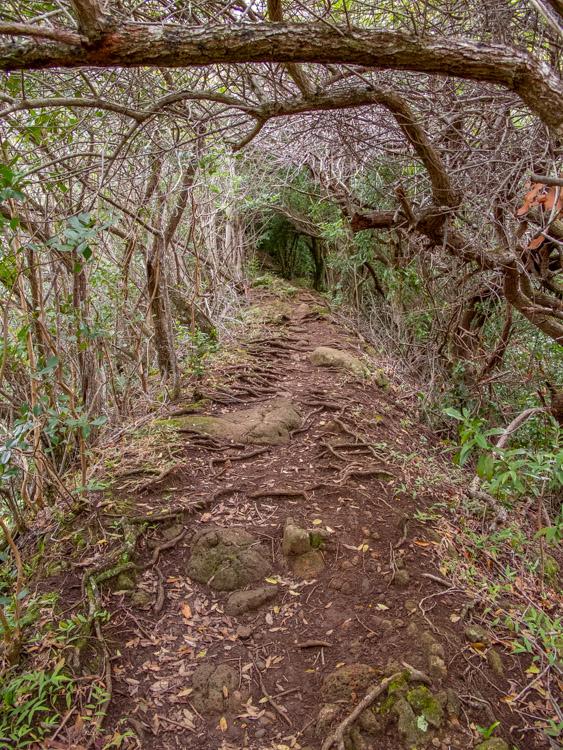 Small Ridge Line Tunnel Trail to Ka'ala