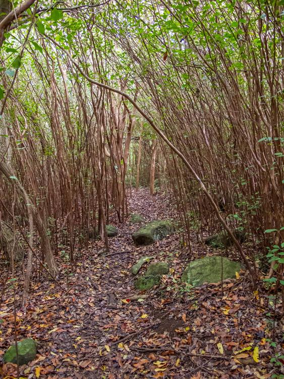 Forest along the way to Ka'ala