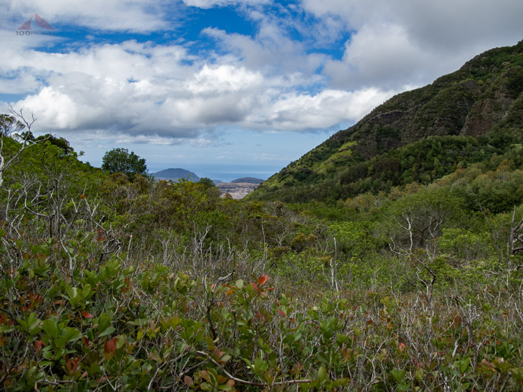 Ocean Peek from the Waianae Kai Forest Reserve on the way to Ka'ala