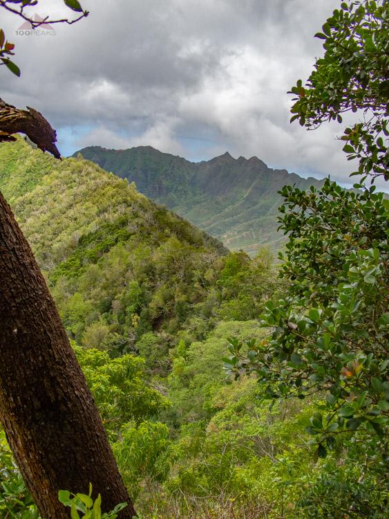 Makua Keaau Ridge from Ka'ala Ridge Trail