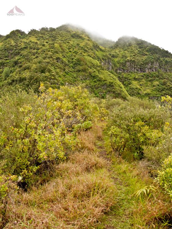 Steep section of the Ka'ala Ridgeline Trail