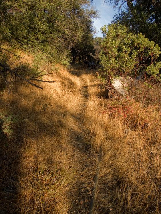 The trail through the grass