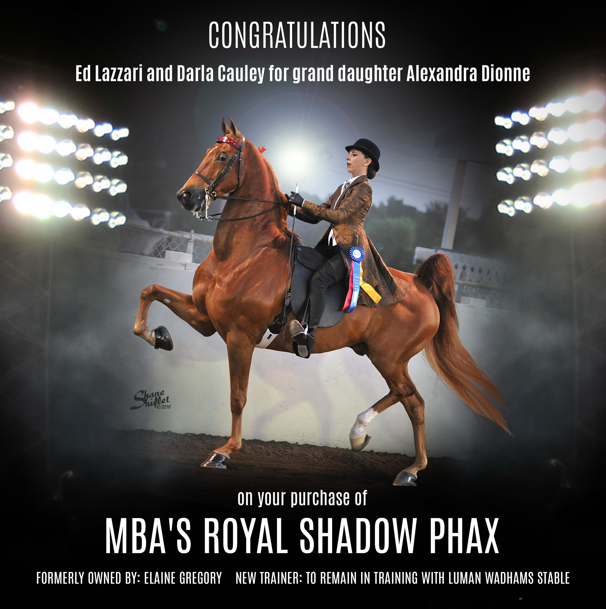 MBA's Royal Shadow Phax.jpg
