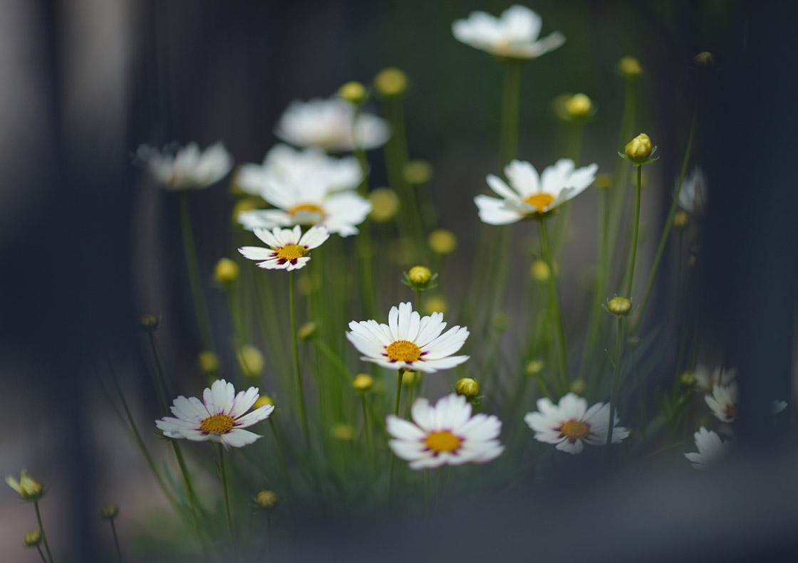 5flowers.jpg