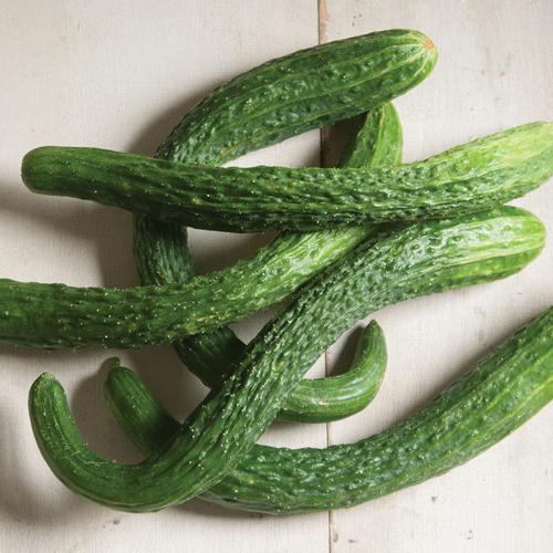 csa-veg-cuke-1.jpg