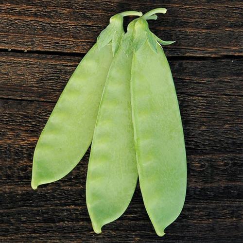 csa-veg-peas-1.jpg