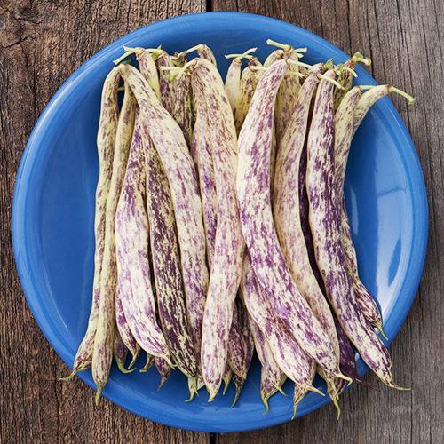 csa-veg-beans-1.jpg