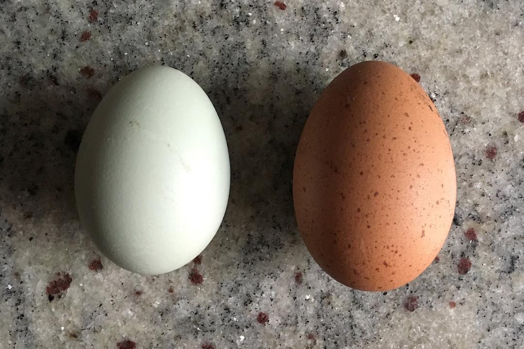 eggs-helen-crop.jpg