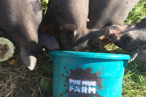 pigs-n-tote-crop.jpg