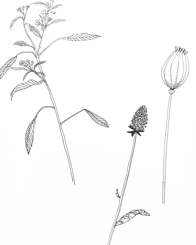 bloem-lijn-m.jpg
