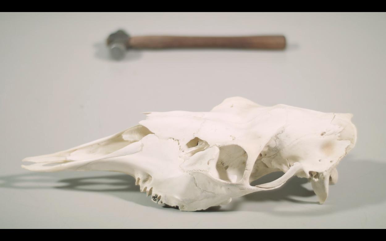 Harriina Räinä:  Hunted  (still-kuva videosta, kesto 5:00), 2018