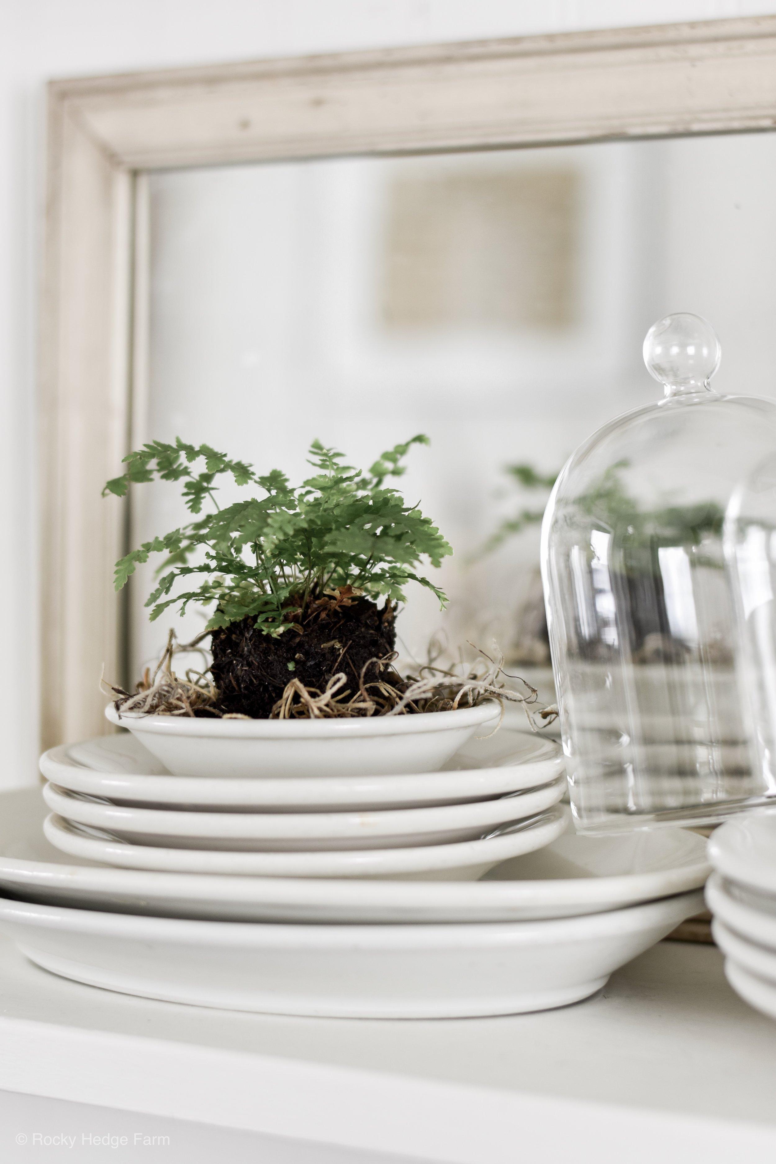 Growing Ferns Under Glass - Bell Jar Cloche | Rocky Hedge Farm