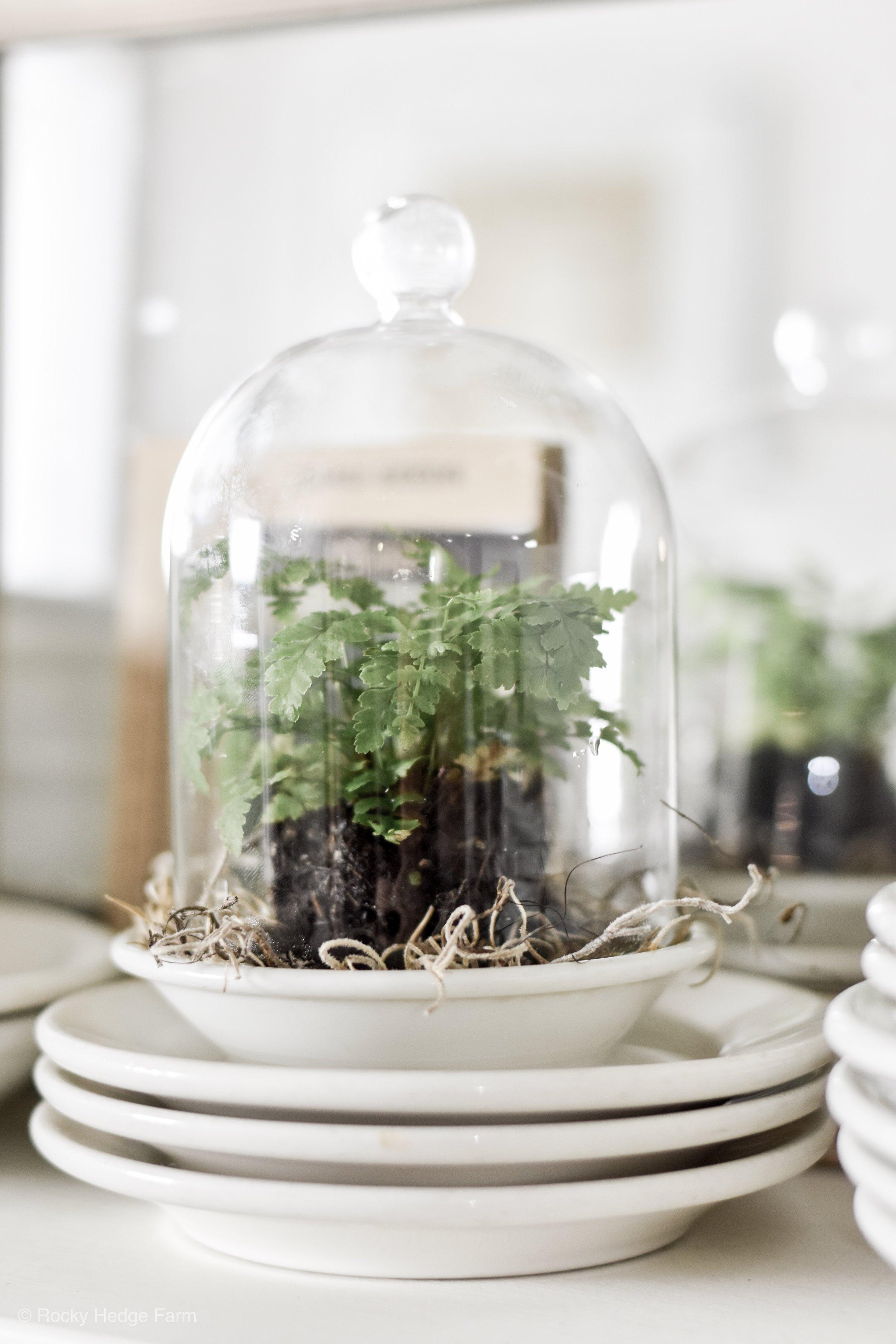 DIY Glass Plant Cloche - Plants to Grow Under a Cloche | Rocky Hedge Farm
