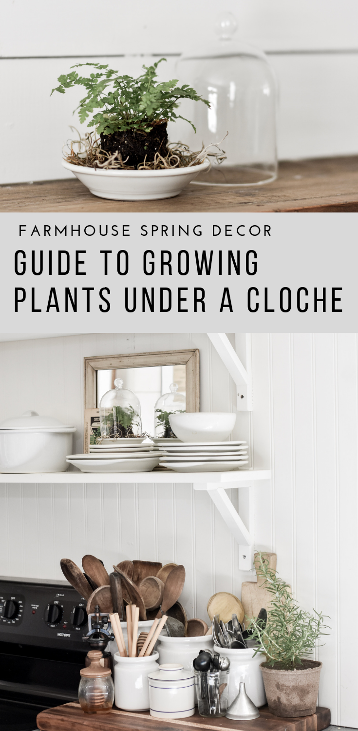 Guide to Growing Plants Under a Cloche | Rocky Hedge Farm