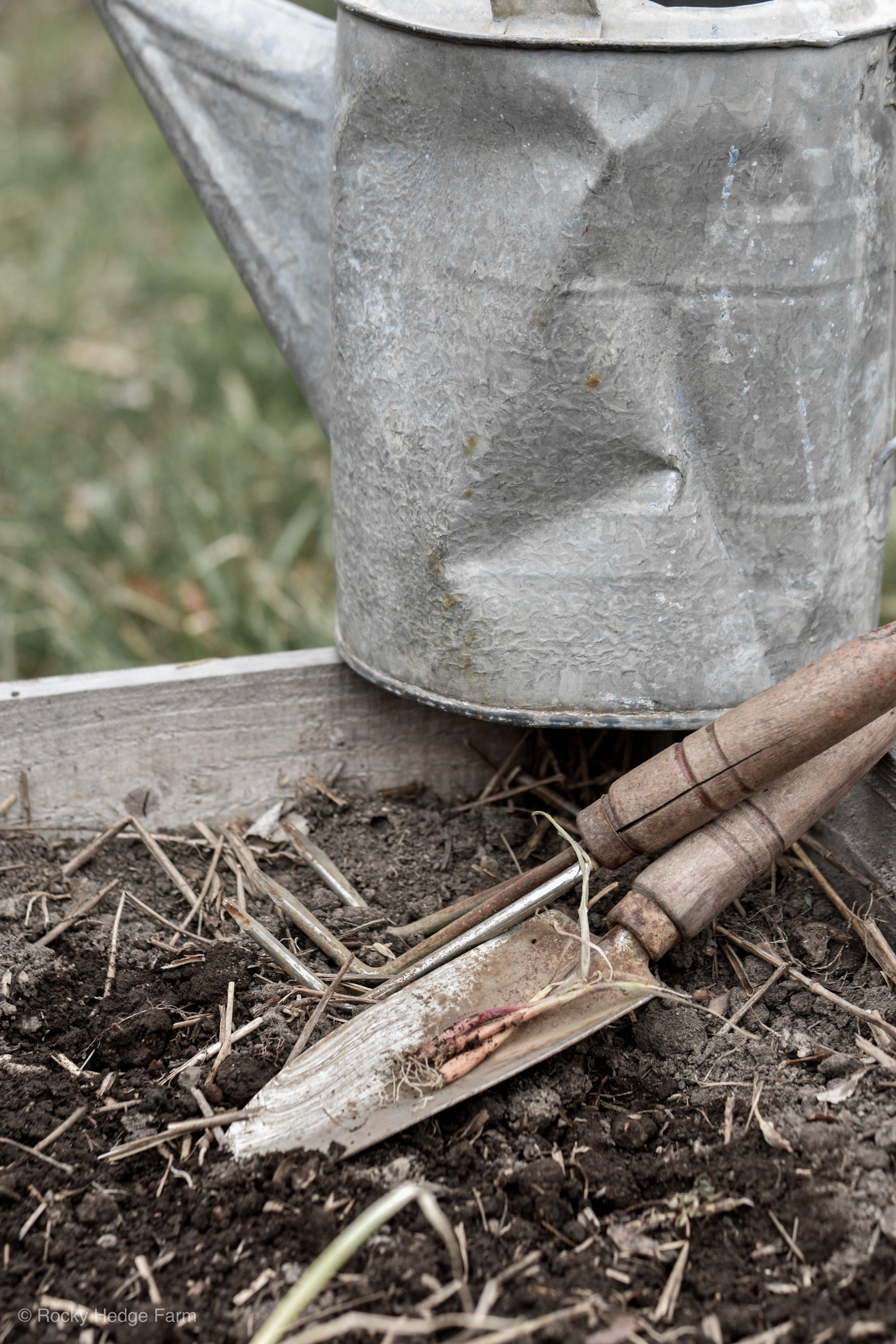 How to Plant Onions   Rocky Hedge Farm