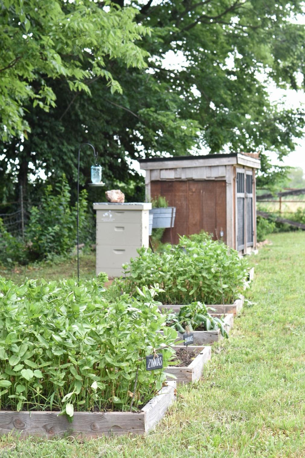 2019 Homestead Goals  Beekeping  Flower Gardens Vegetable Gardens.jpeg