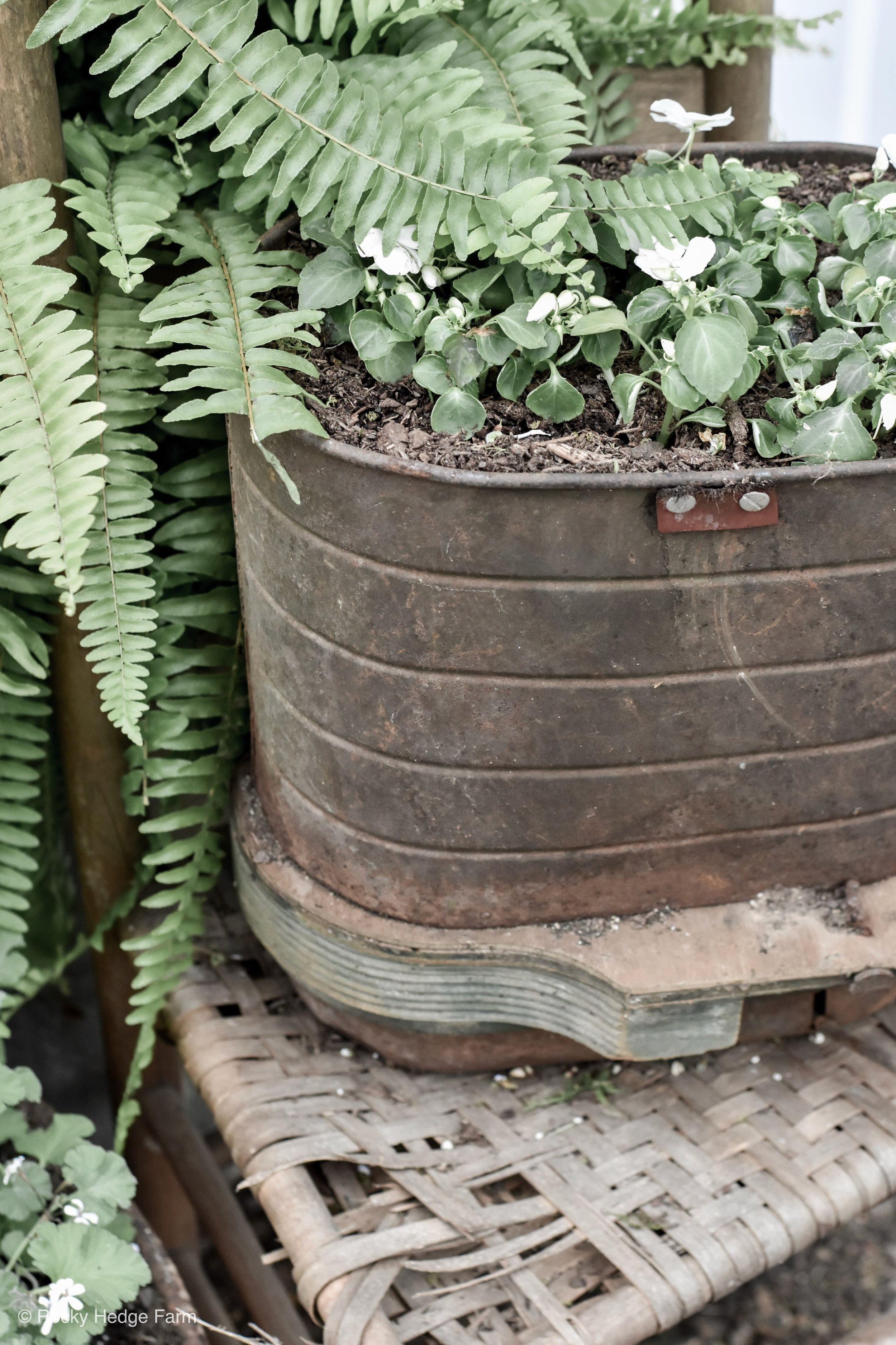 Antique Seed Planter | Rocky Hedge Farm