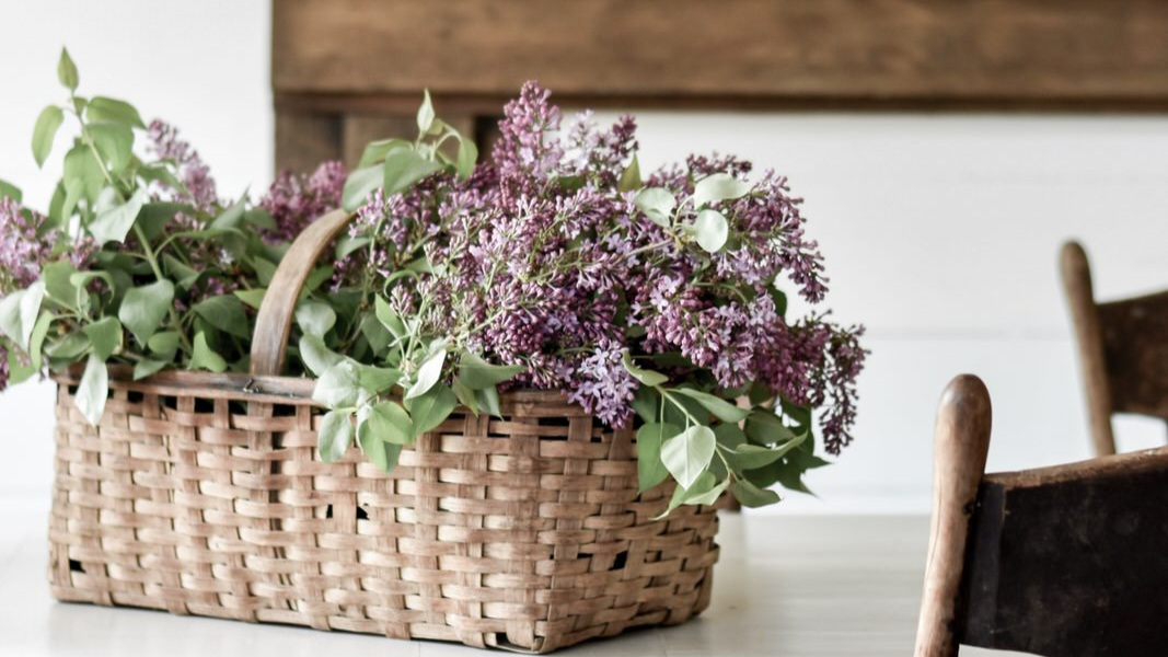 How to Keep Lilacs Fresh Longer | Rocky Hedge Farm