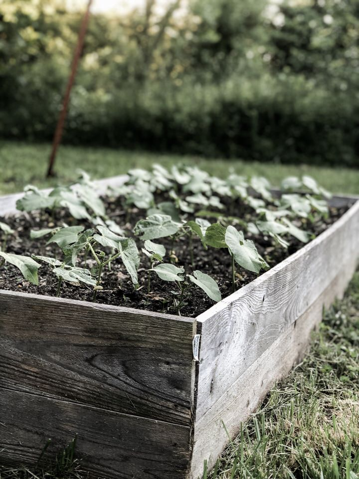 Raised Garden Bed Vegetable Green Bean Bed | Rocky Hedge Farm