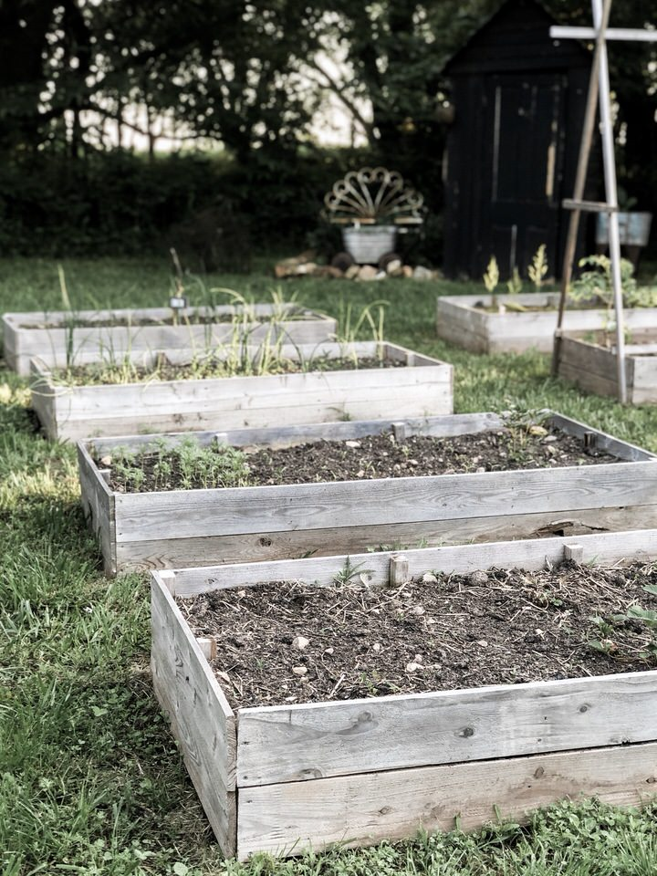 Raised Garden Bed for Strawberry Plants | Rocky Hedge Farm