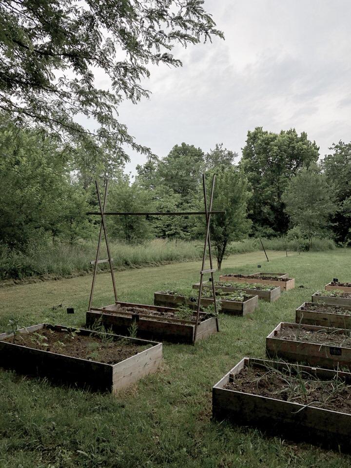 高菜园苗床布局思路石篱农场亚博体育阿根廷合作伙伴