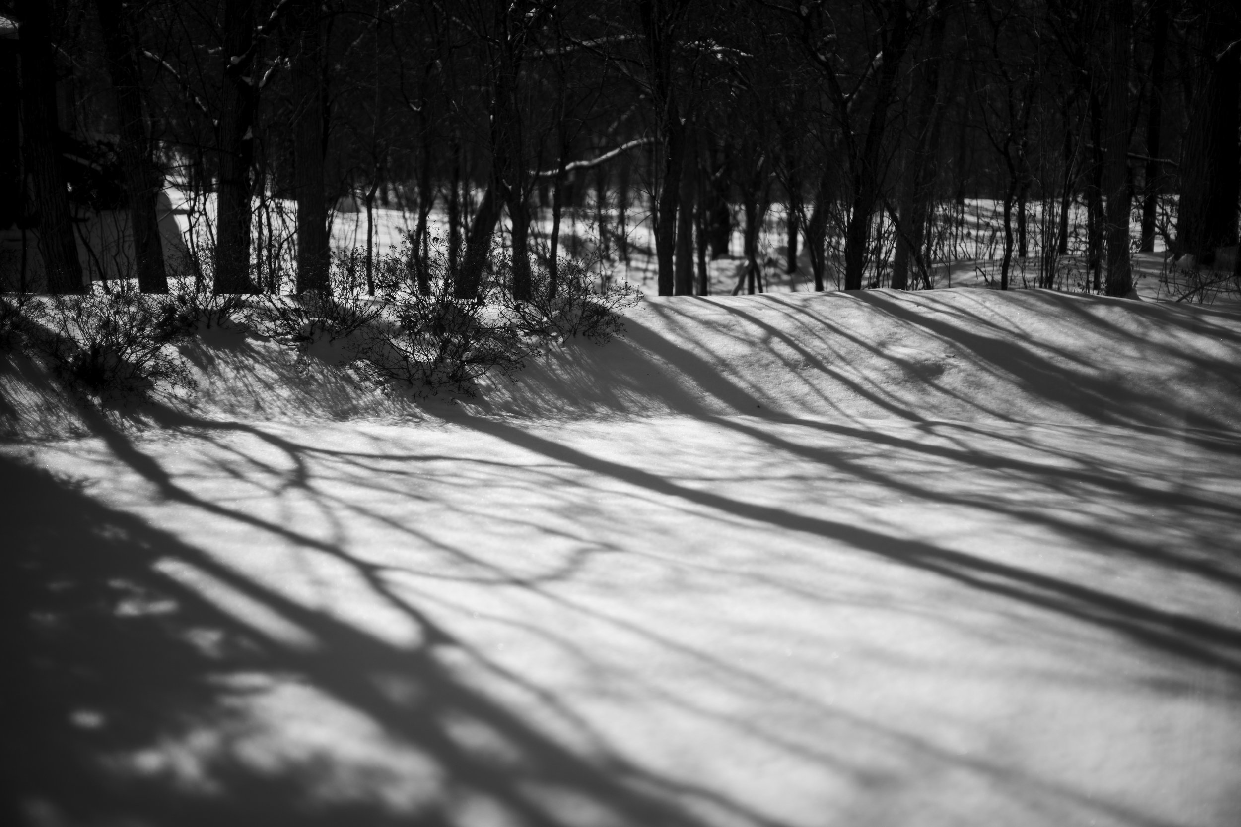 Tree Shadows on Snow.jpg