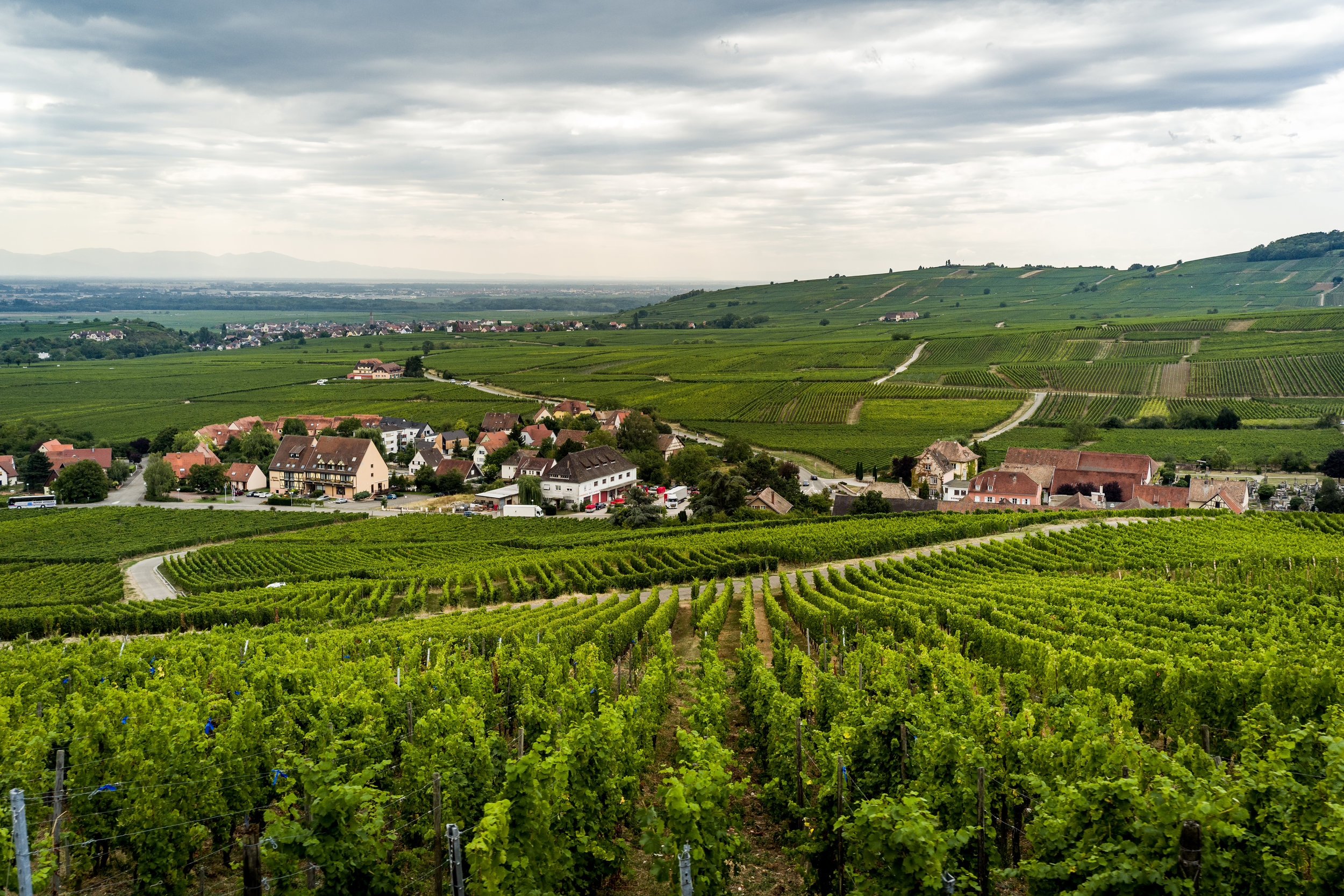 Vineyards of Ribeauville.jpg