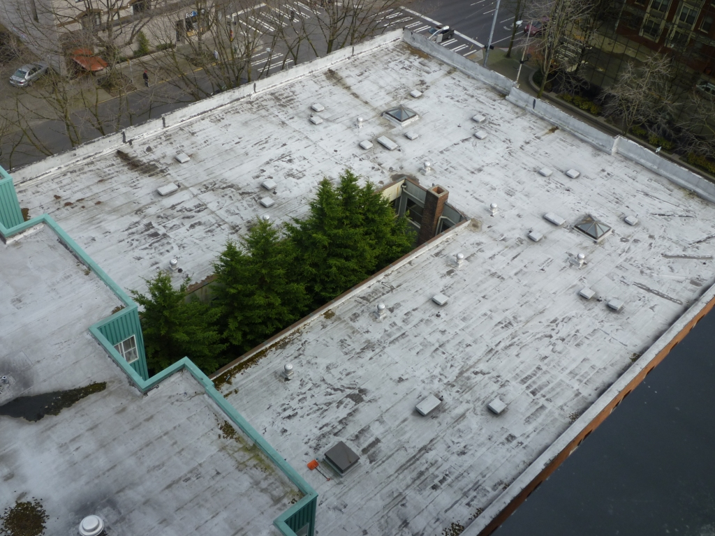 Seattle ugly roof with trees (1).JPG
